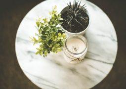 Domowa świeczka i rośliny